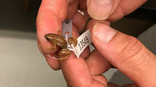 Biology professor discovers three new frog species