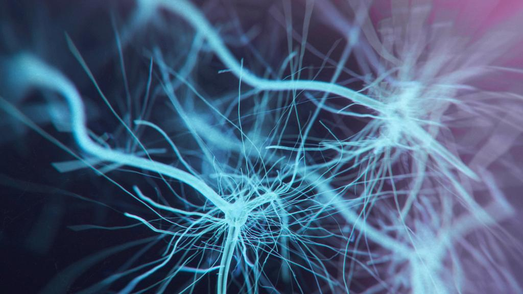 Human Brain Neuron System