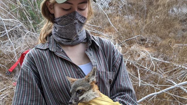 student holding fox