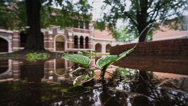 A sprout appears at the Gumenick Quadrangle after a hard rain