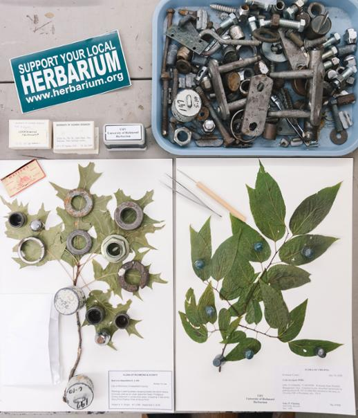 Items from the Herbarium, including a sticker that reads