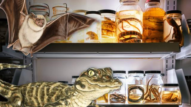 Illustrations of a small brown bat, and a  young alligator, over top of a photograph of reptile, amphibian, mammal, and fish specimens in jars