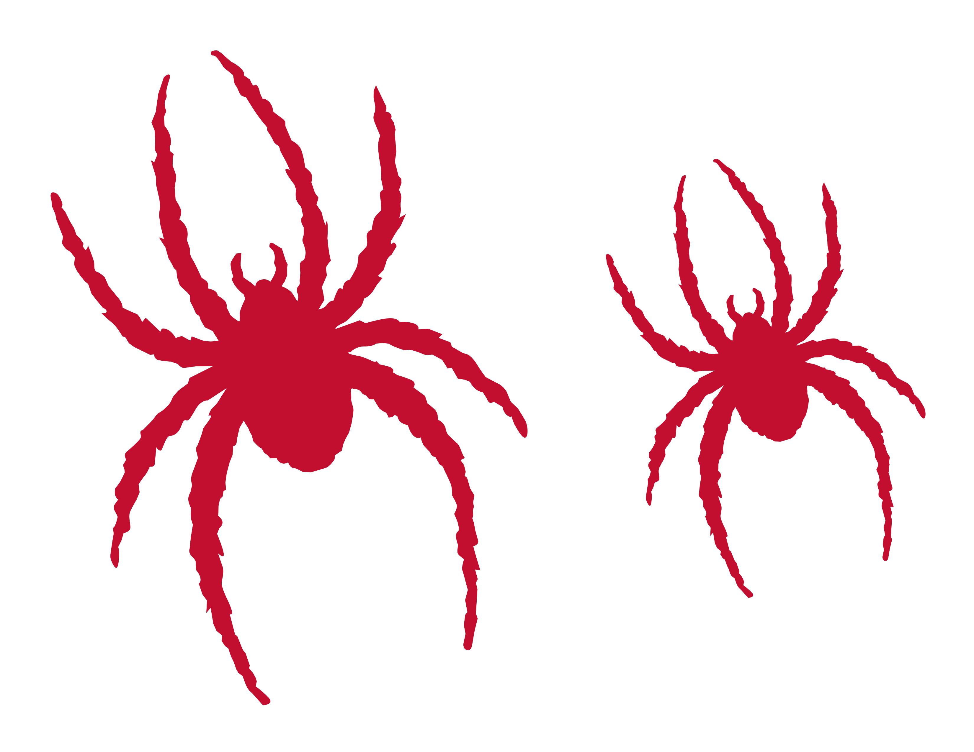 Small red spider