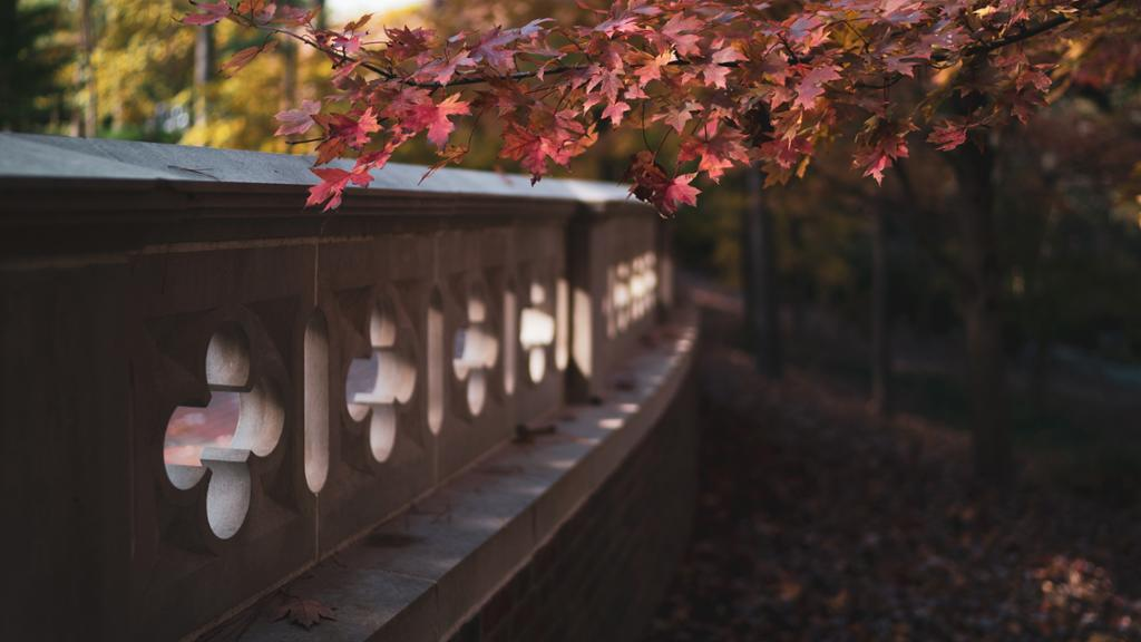 Closeup image of the Forum on a fall day. The leaves are red with sunshine peeking in from behind the brick.