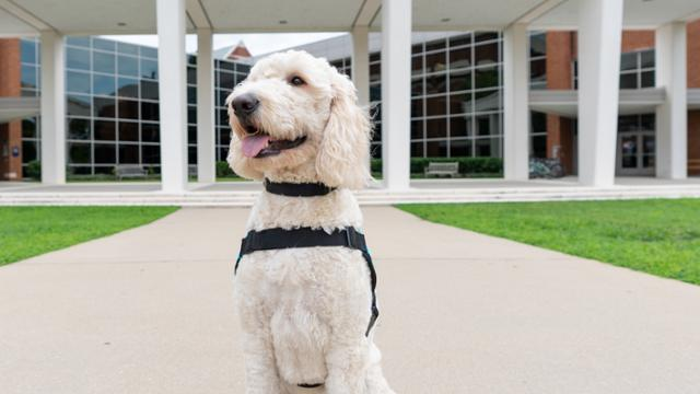 Emmett, the therapy dog, sitting in front of the Weinstein Center.