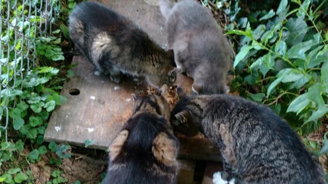 UR landscaper cares for 13 campus cats