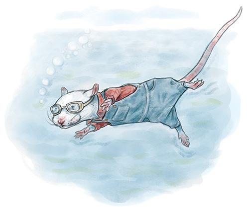 Country rat swimming